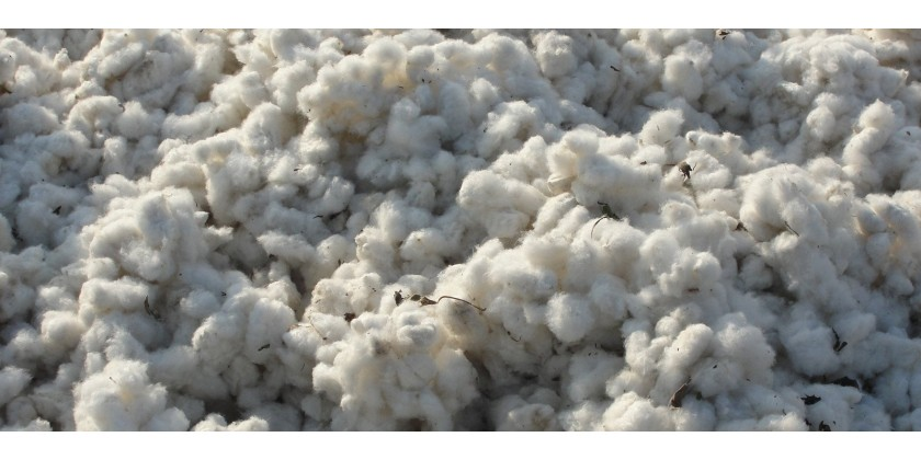 Focus on… cotton: the fabric of the past